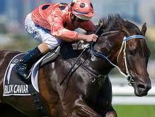Black Caviar Race Horse