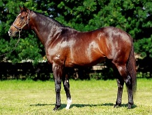 Onemorenomore Race Horse