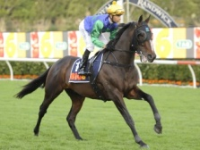 Trusting Race Horse